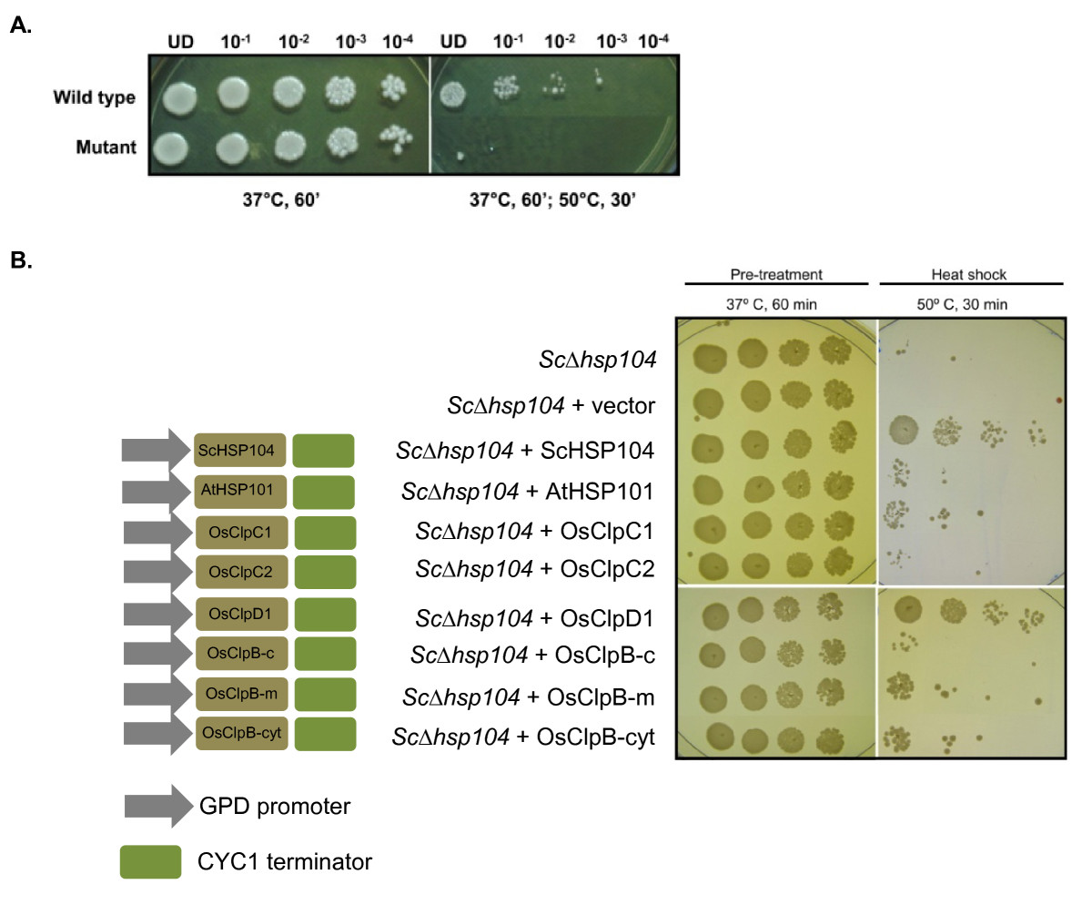 http://static-content.springer.com/image/art%3A10.1186%2F1471-2164-11-95/MediaObjects/12864_2009_Article_2689_Fig7_HTML.jpg