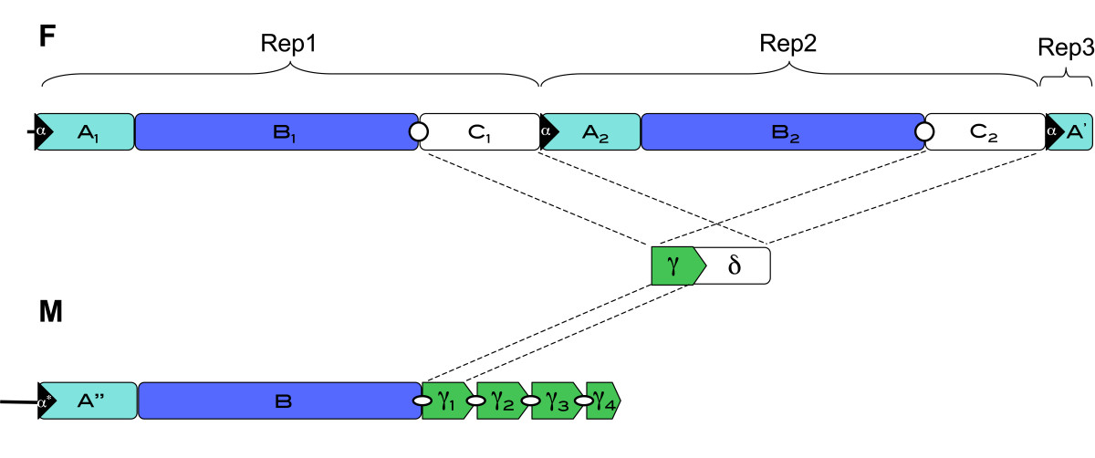 http://static-content.springer.com/image/art%3A10.1186%2F1471-2164-12-442/MediaObjects/12864_2011_3583_Fig4_HTML.jpg