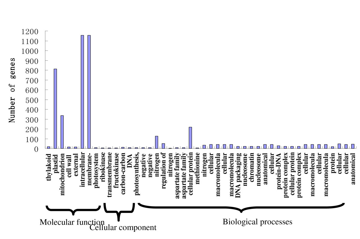 http://static-content.springer.com/image/art%3A10.1186%2F1471-2164-12-525/MediaObjects/12864_2011_3659_Fig2_HTML.jpg