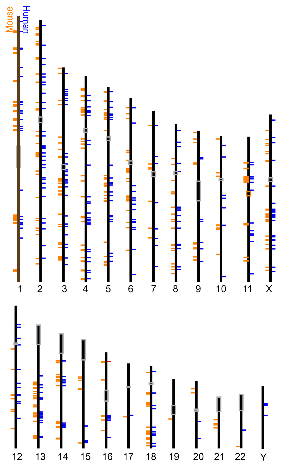 http://static-content.springer.com/image/art%3A10.1186%2F1471-2164-12-562/MediaObjects/12864_2011_3864_Fig5_HTML.jpg