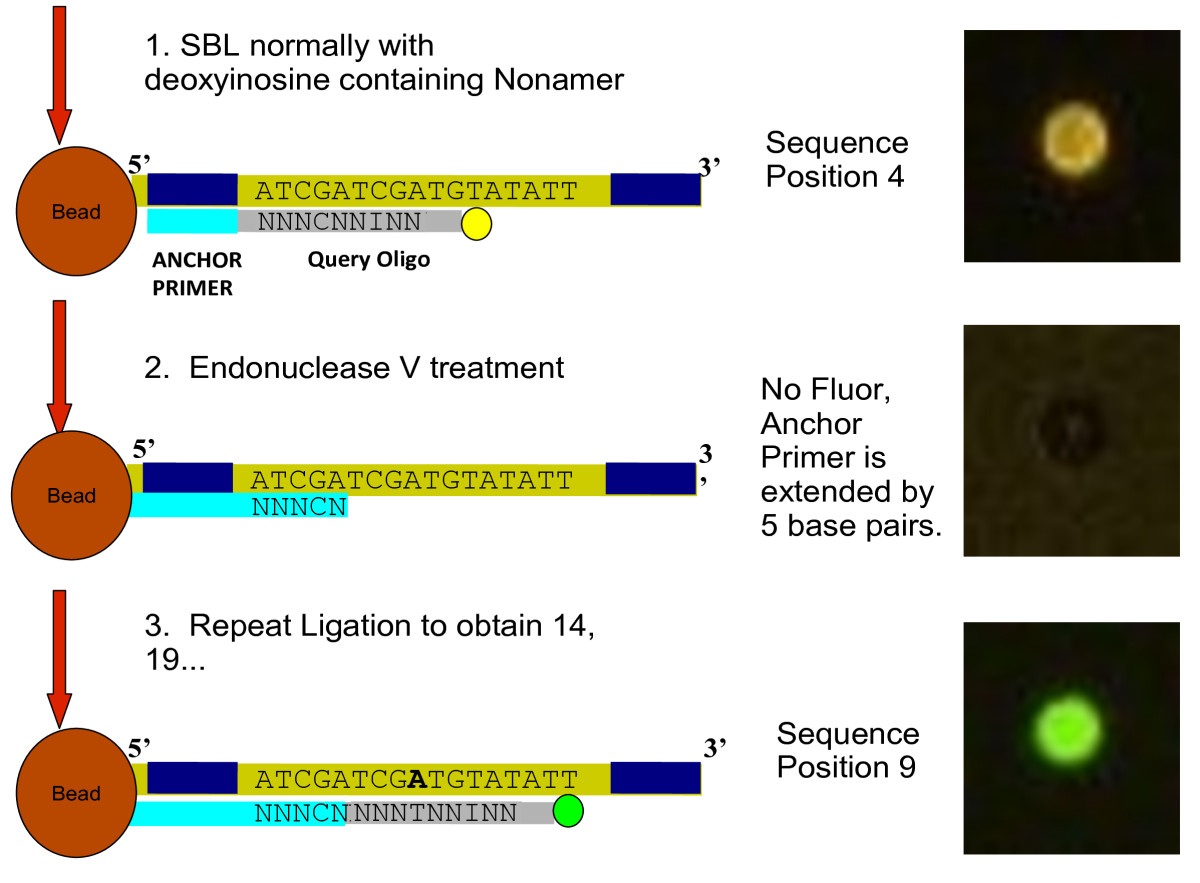 http://static-content.springer.com/image/art%3A10.1186%2F1471-2164-12-598/MediaObjects/12864_2011_3836_Fig7_HTML.jpg