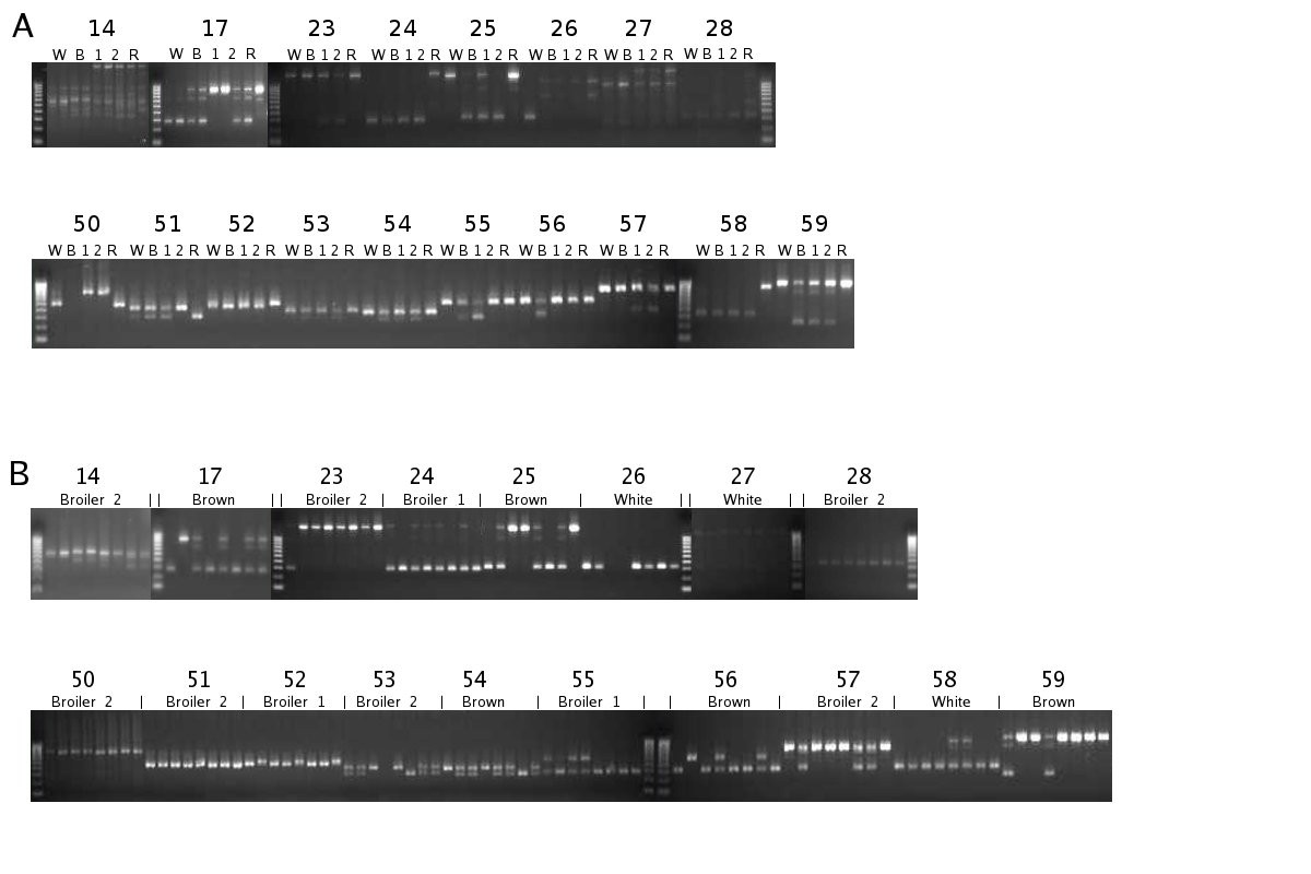 http://static-content.springer.com/image/art%3A10.1186%2F1471-2164-12-94/MediaObjects/12864_2010_3222_Fig3_HTML.jpg