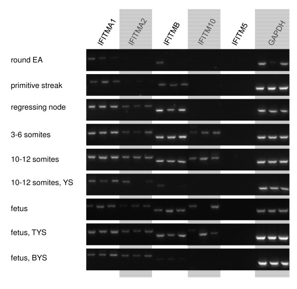 http://static-content.springer.com/image/art%3A10.1186%2F1471-2164-13-155/MediaObjects/12864_2011_4096_Fig5_HTML.jpg