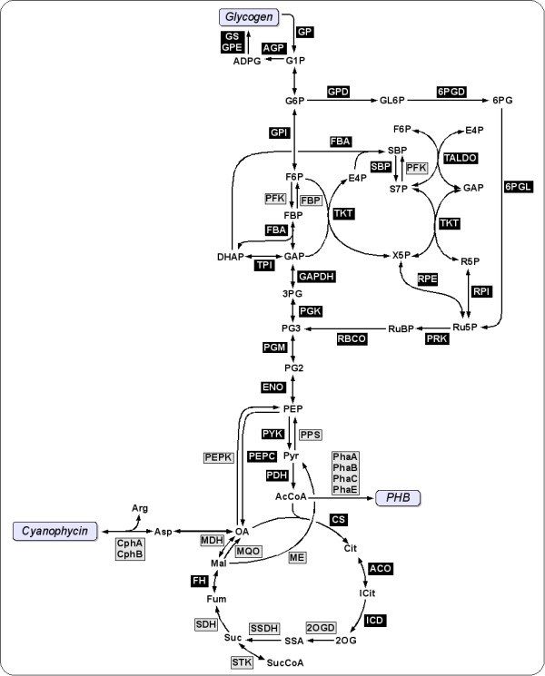 http://static-content.springer.com/image/art%3A10.1186%2F1471-2164-13-56/MediaObjects/12864_2011_4009_Fig8_HTML.jpg