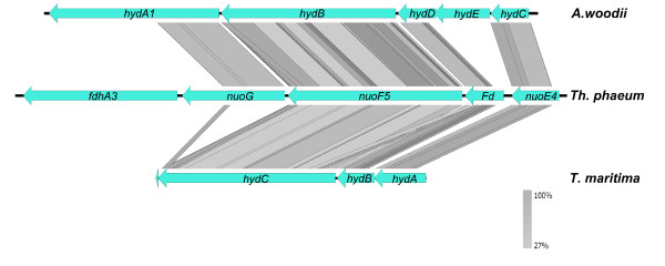 http://static-content.springer.com/image/art%3A10.1186%2F1471-2164-13-723/MediaObjects/12864_2012_4634_Fig2_HTML.jpg