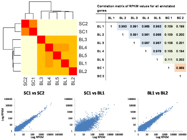 http://static-content.springer.com/image/art%3A10.1186%2F1471-2164-14-350/MediaObjects/12864_2012_5047_Fig4_HTML.jpg