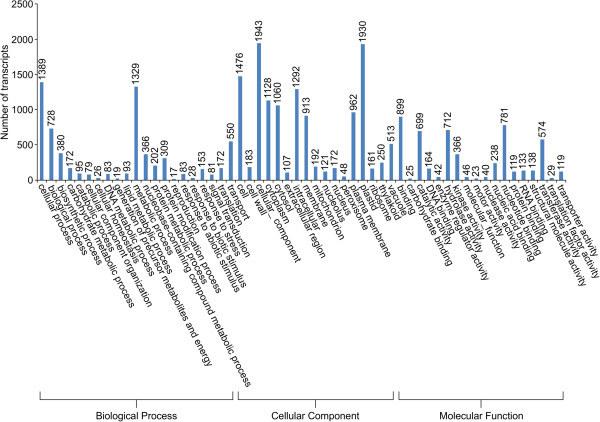 http://static-content.springer.com/image/art%3A10.1186%2F1471-2164-14-564/MediaObjects/12864_2013_5281_Fig4_HTML.jpg