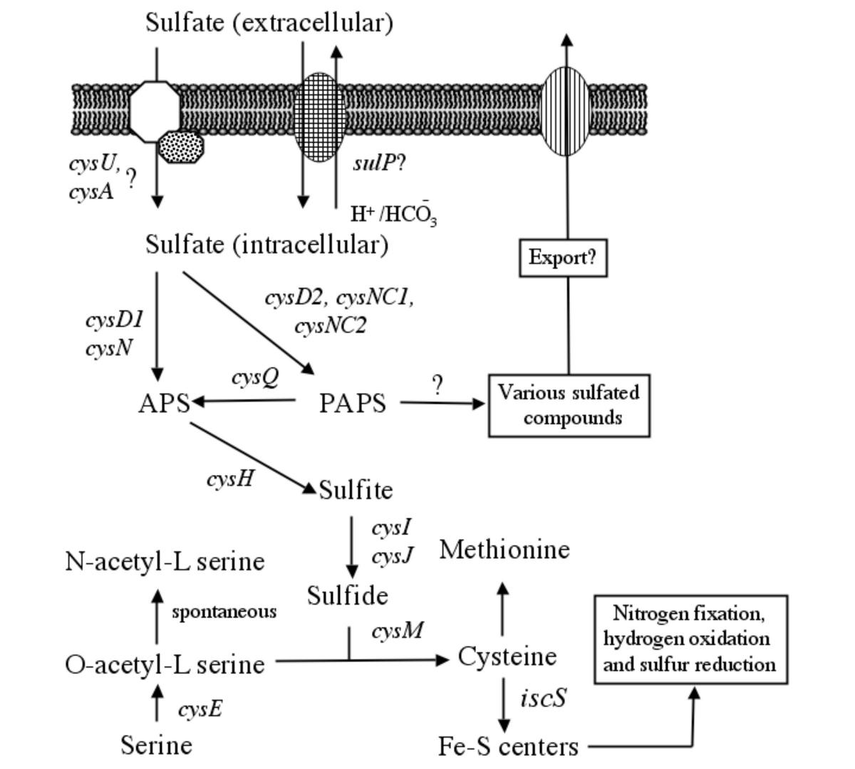 http://static-content.springer.com/image/art%3A10.1186%2F1471-2164-4-51/MediaObjects/12864_2003_Article_100_Fig1_HTML.jpg