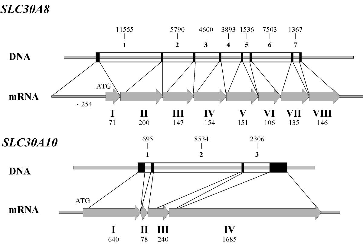 http://static-content.springer.com/image/art%3A10.1186%2F1471-2164-5-32/MediaObjects/12864_2004_Article_134_Fig1_HTML.jpg