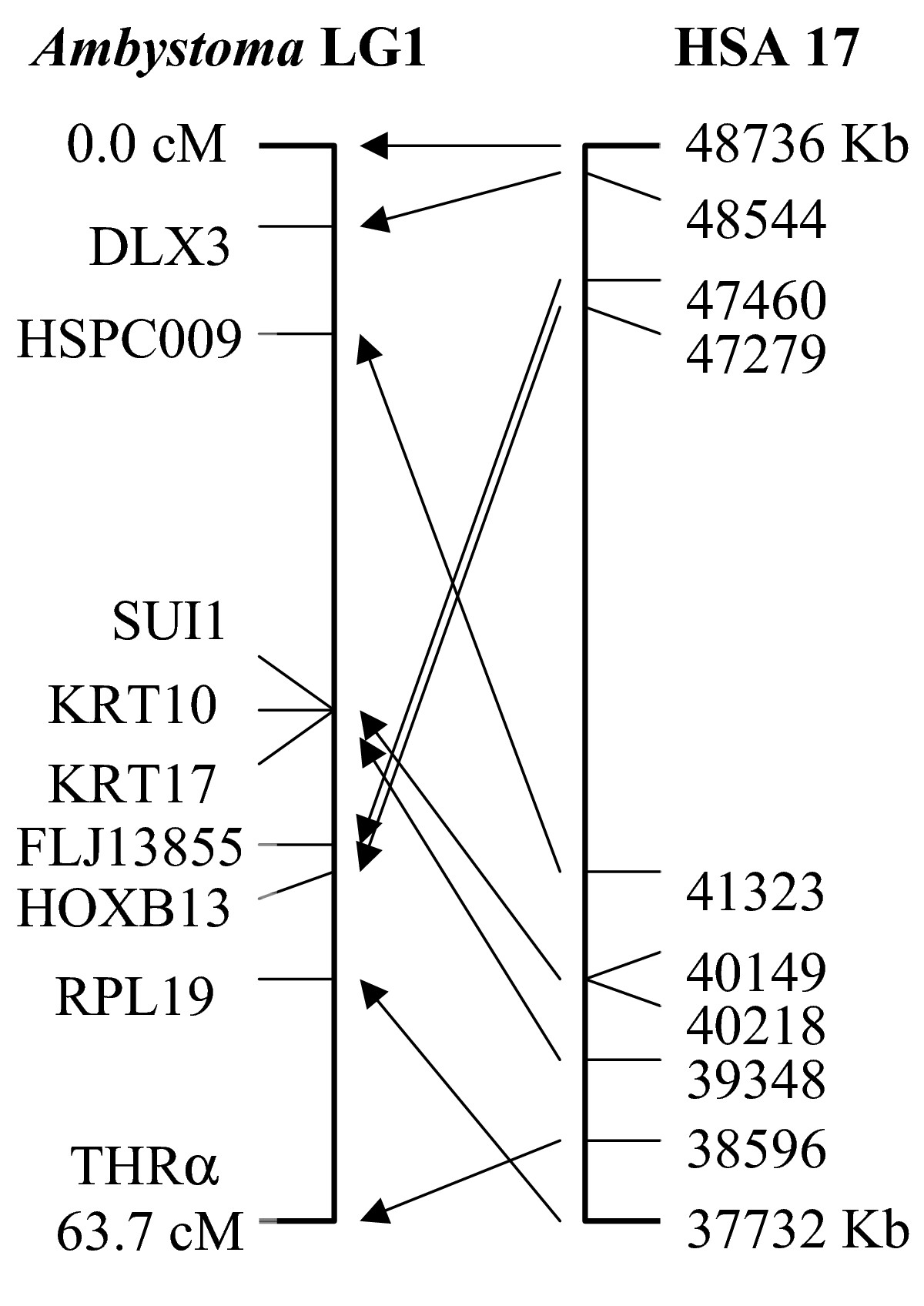 http://static-content.springer.com/image/art%3A10.1186%2F1471-2164-5-54/MediaObjects/12864_2004_Article_156_Fig4_HTML.jpg