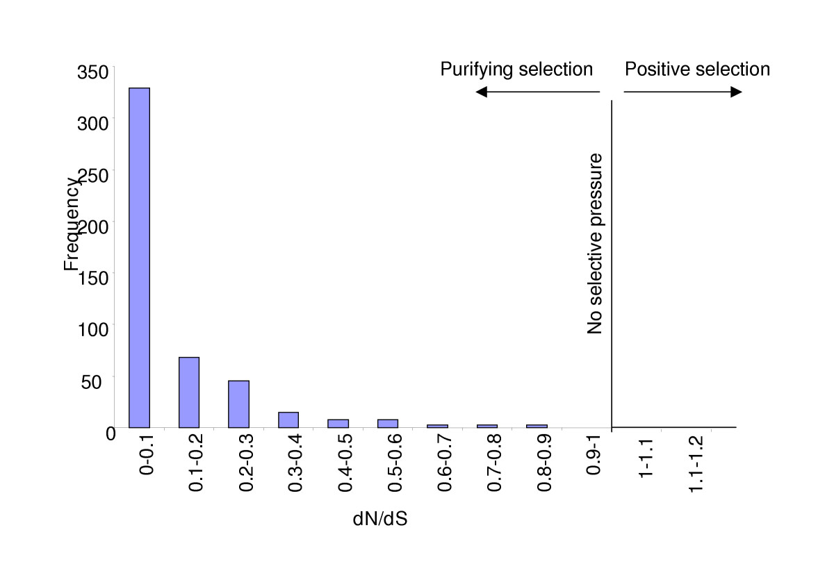 http://static-content.springer.com/image/art%3A10.1186%2F1471-2164-6-58/MediaObjects/12864_2004_Article_259_Fig5_HTML.jpg