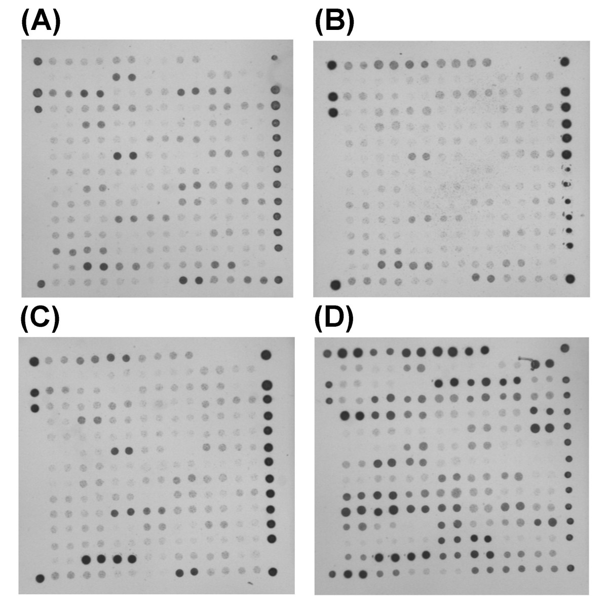 http://static-content.springer.com/image/art%3A10.1186%2F1471-2164-7-144/MediaObjects/12864_2006_Article_527_Fig7_HTML.jpg