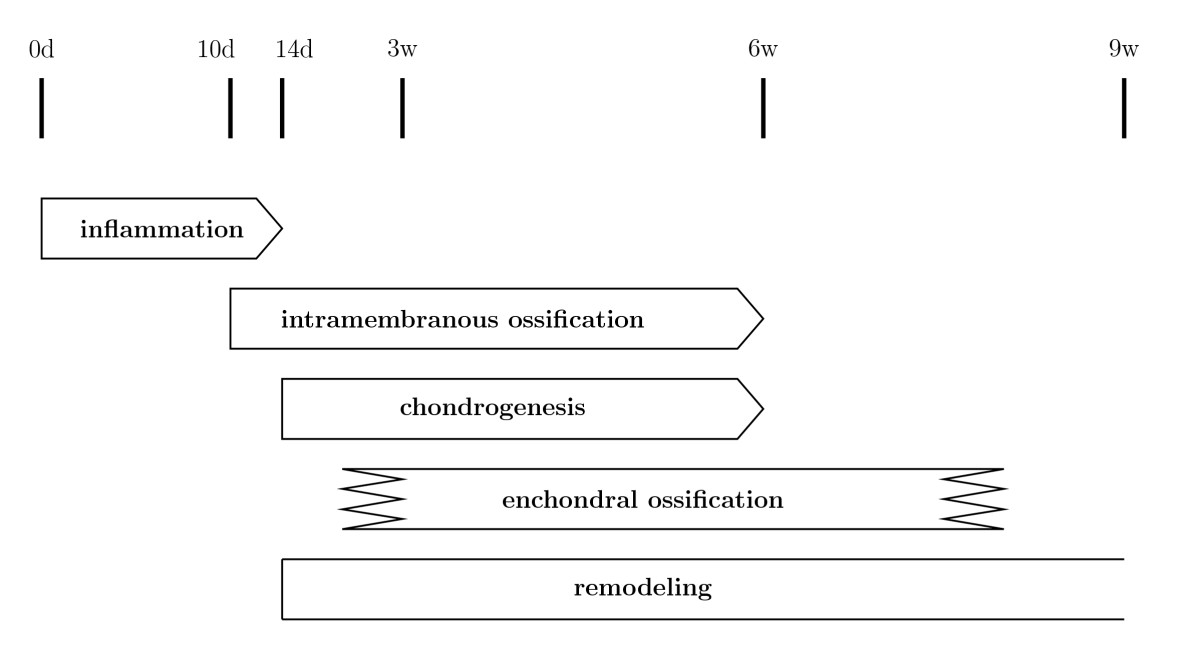 http://static-content.springer.com/image/art%3A10.1186%2F1471-2164-7-172/MediaObjects/12864_2006_Article_555_Fig5_HTML.jpg