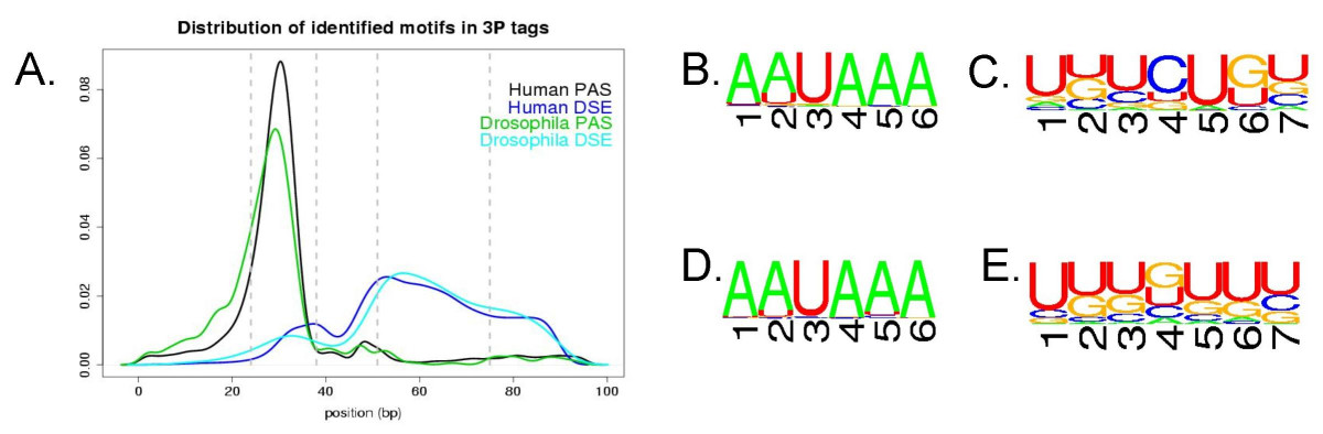 http://static-content.springer.com/image/art%3A10.1186%2F1471-2164-7-176/MediaObjects/12864_2005_Article_559_Fig3_HTML.jpg