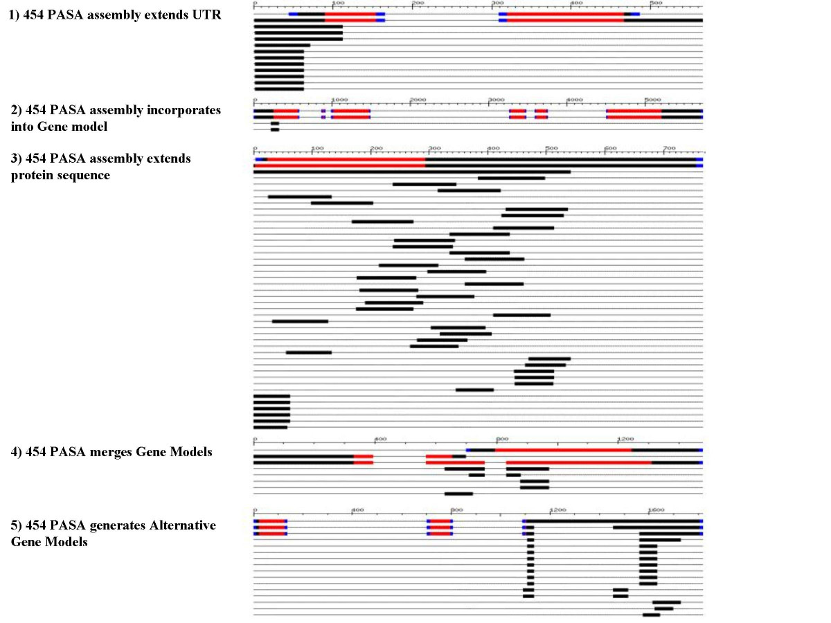 http://static-content.springer.com/image/art%3A10.1186%2F1471-2164-7-272/MediaObjects/12864_2006_Article_655_Fig4_HTML.jpg