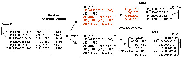 http://static-content.springer.com/image/art%3A10.1186%2F1471-2164-7-81/MediaObjects/12864_2005_Article_464_Fig7_HTML.jpg