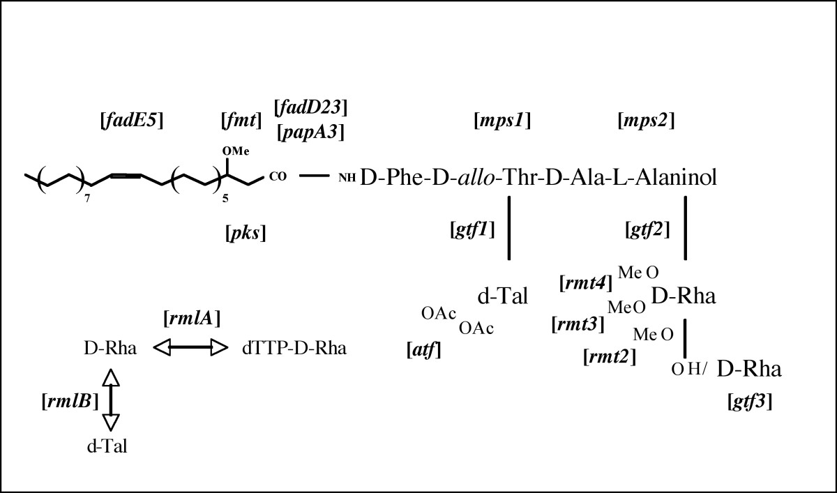 http://static-content.springer.com/image/art%3A10.1186%2F1471-2164-8-114/MediaObjects/12864_2006_Article_827_Fig1_HTML.jpg