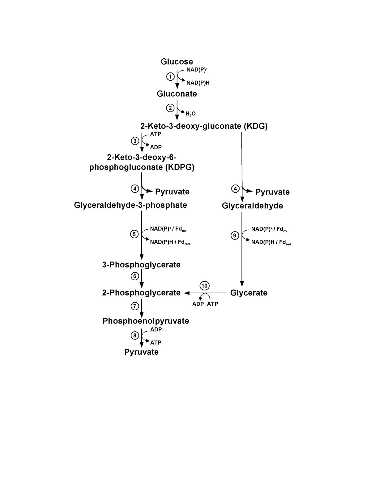 http://static-content.springer.com/image/art%3A10.1186%2F1471-2164-8-301/MediaObjects/12864_2007_Article_1014_Fig1_HTML.jpg