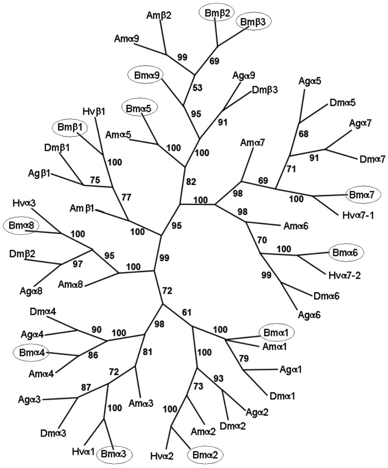 http://static-content.springer.com/image/art%3A10.1186%2F1471-2164-8-324/MediaObjects/12864_2007_Article_1037_Fig2_HTML.jpg