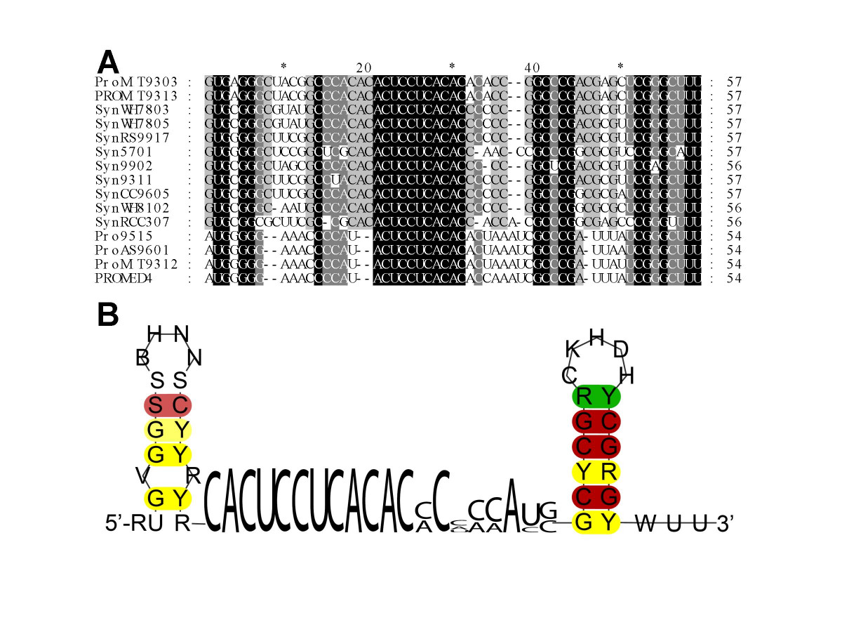 http://static-content.springer.com/image/art%3A10.1186%2F1471-2164-8-375/MediaObjects/12864_2007_Article_1088_Fig1_HTML.jpg