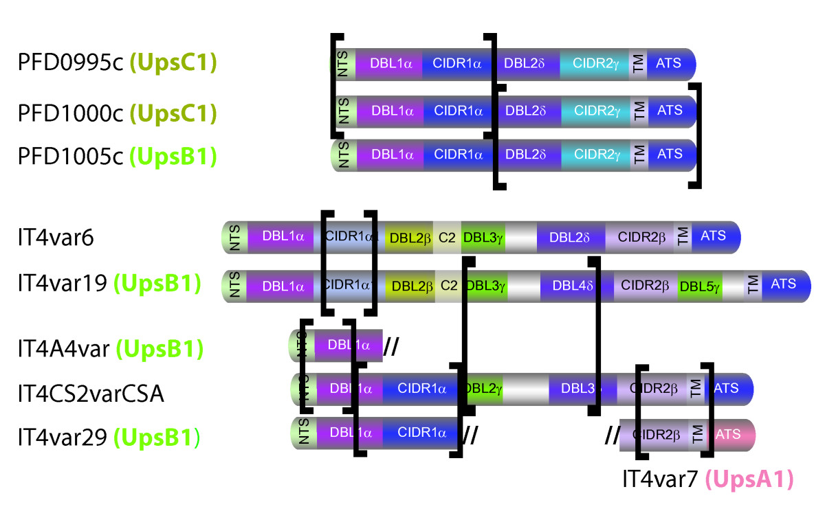 http://static-content.springer.com/image/art%3A10.1186%2F1471-2164-8-45/MediaObjects/12864_2006_Article_758_Fig6_HTML.jpg