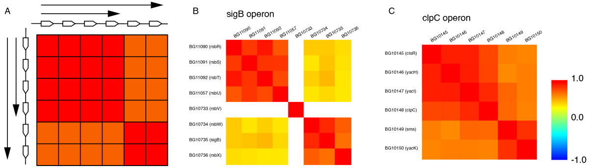 http://static-content.springer.com/image/art%3A10.1186%2F1471-2164-8-48/MediaObjects/12864_2006_Article_761_Fig6_HTML.jpg