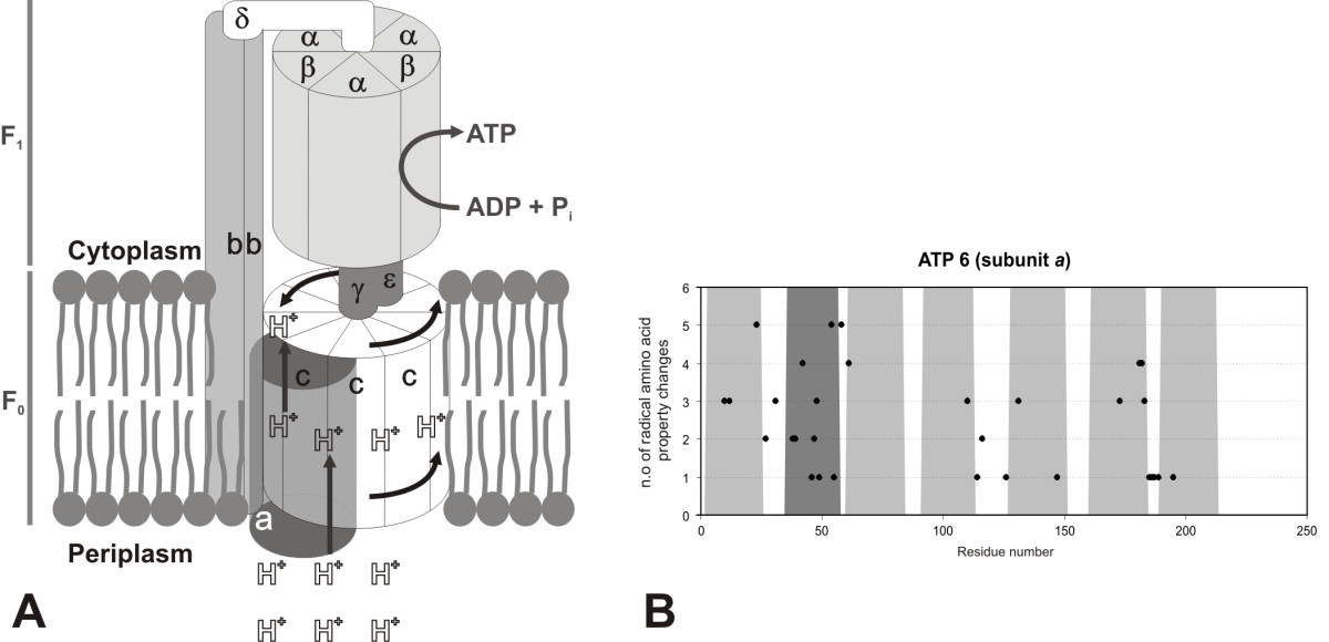 http://static-content.springer.com/image/art%3A10.1186%2F1471-2164-9-119/MediaObjects/12864_2007_Article_1313_Fig12_HTML.jpg