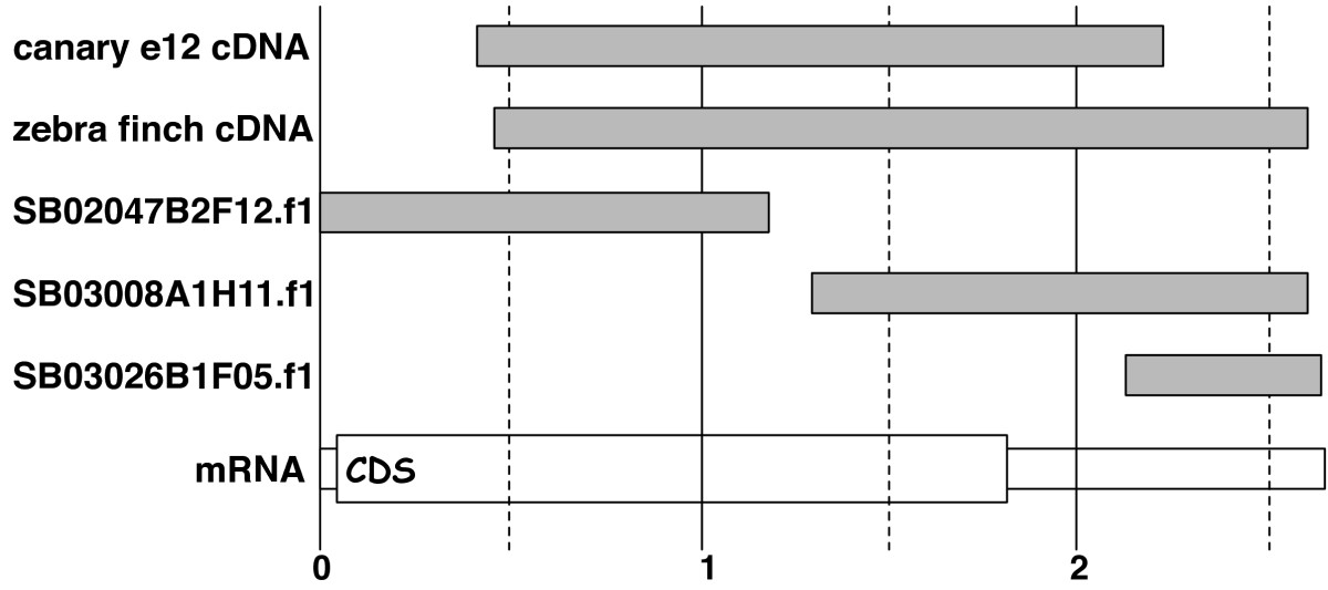 http://static-content.springer.com/image/art%3A10.1186%2F1471-2164-9-131/MediaObjects/12864_2007_Article_1325_Fig1_HTML.jpg