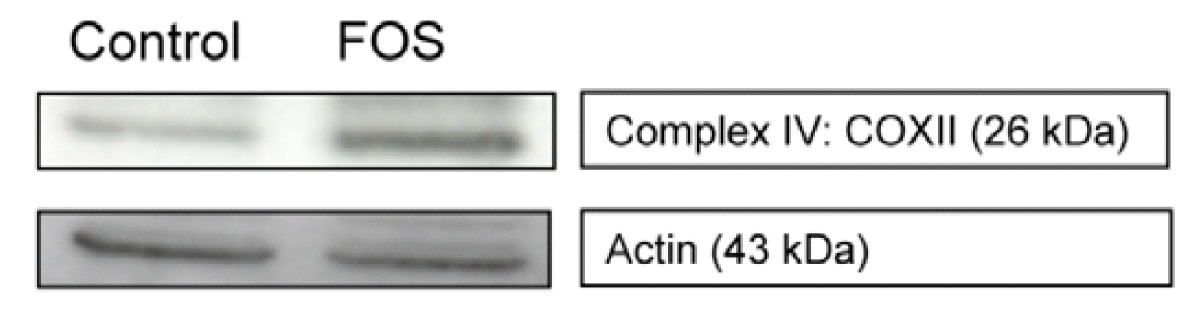 http://static-content.springer.com/image/art%3A10.1186%2F1471-2164-9-144/MediaObjects/12864_2007_Article_1338_Fig3_HTML.jpg