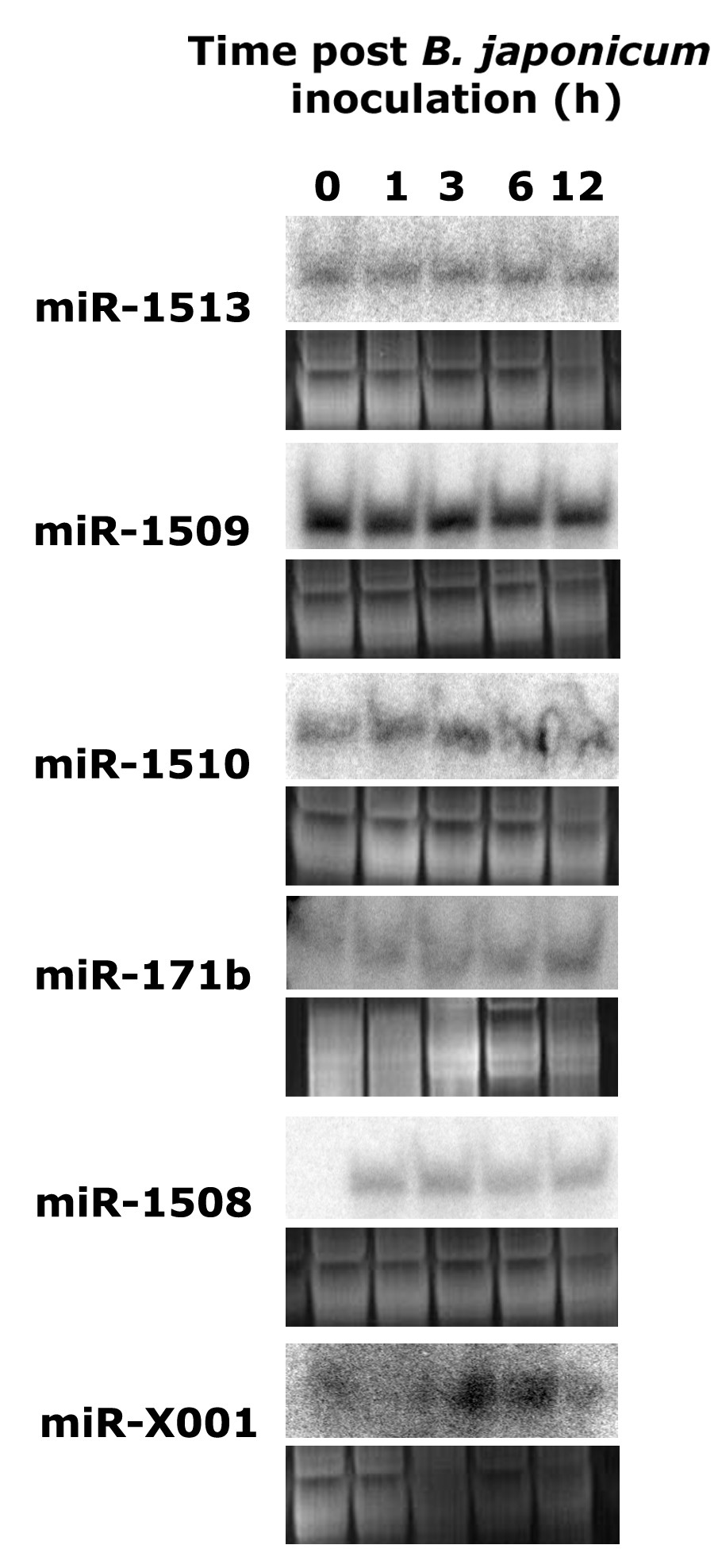 http://static-content.springer.com/image/art%3A10.1186%2F1471-2164-9-160/MediaObjects/12864_2008_Article_1354_Fig4_HTML.jpg
