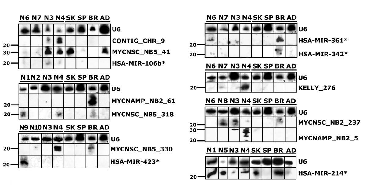 http://static-content.springer.com/image/art%3A10.1186%2F1471-2164-9-52/MediaObjects/12864_2007_Article_1246_Fig3_HTML.jpg