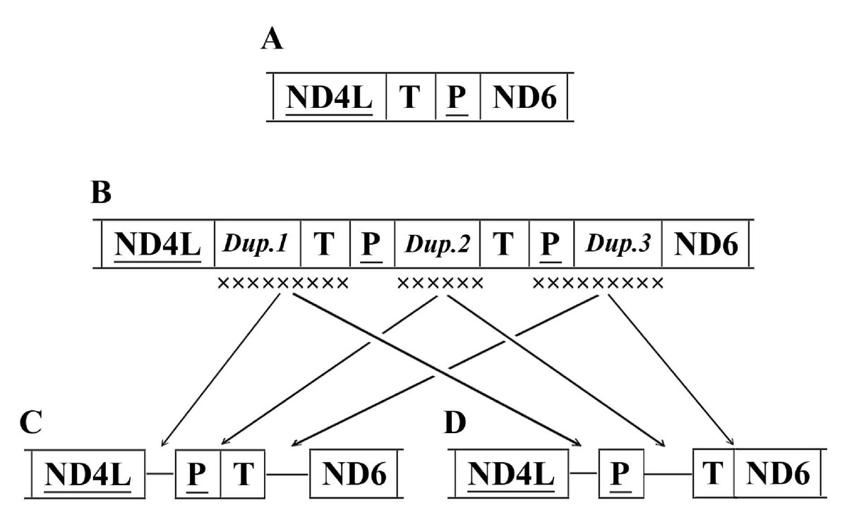 http://static-content.springer.com/image/art%3A10.1186%2F1471-2164-9-610/MediaObjects/12864_2008_Article_1803_Fig3_HTML.jpg