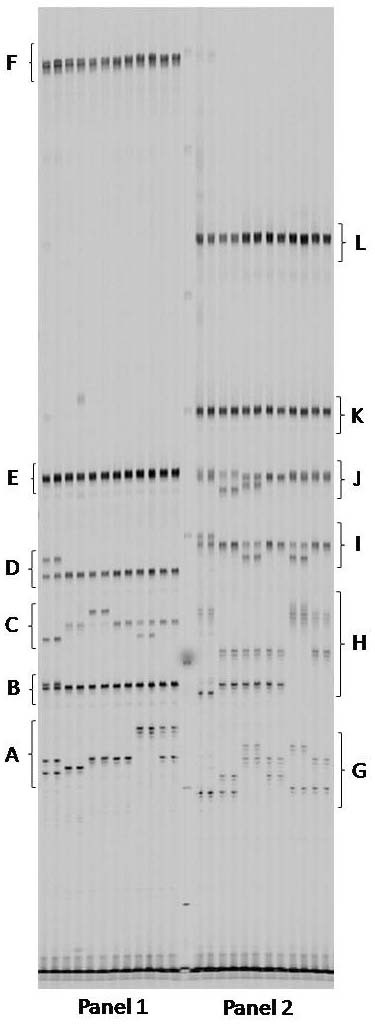 http://static-content.springer.com/image/art%3A10.1186%2F1471-2164-9-80/MediaObjects/12864_2007_Article_1274_Fig4_HTML.jpg