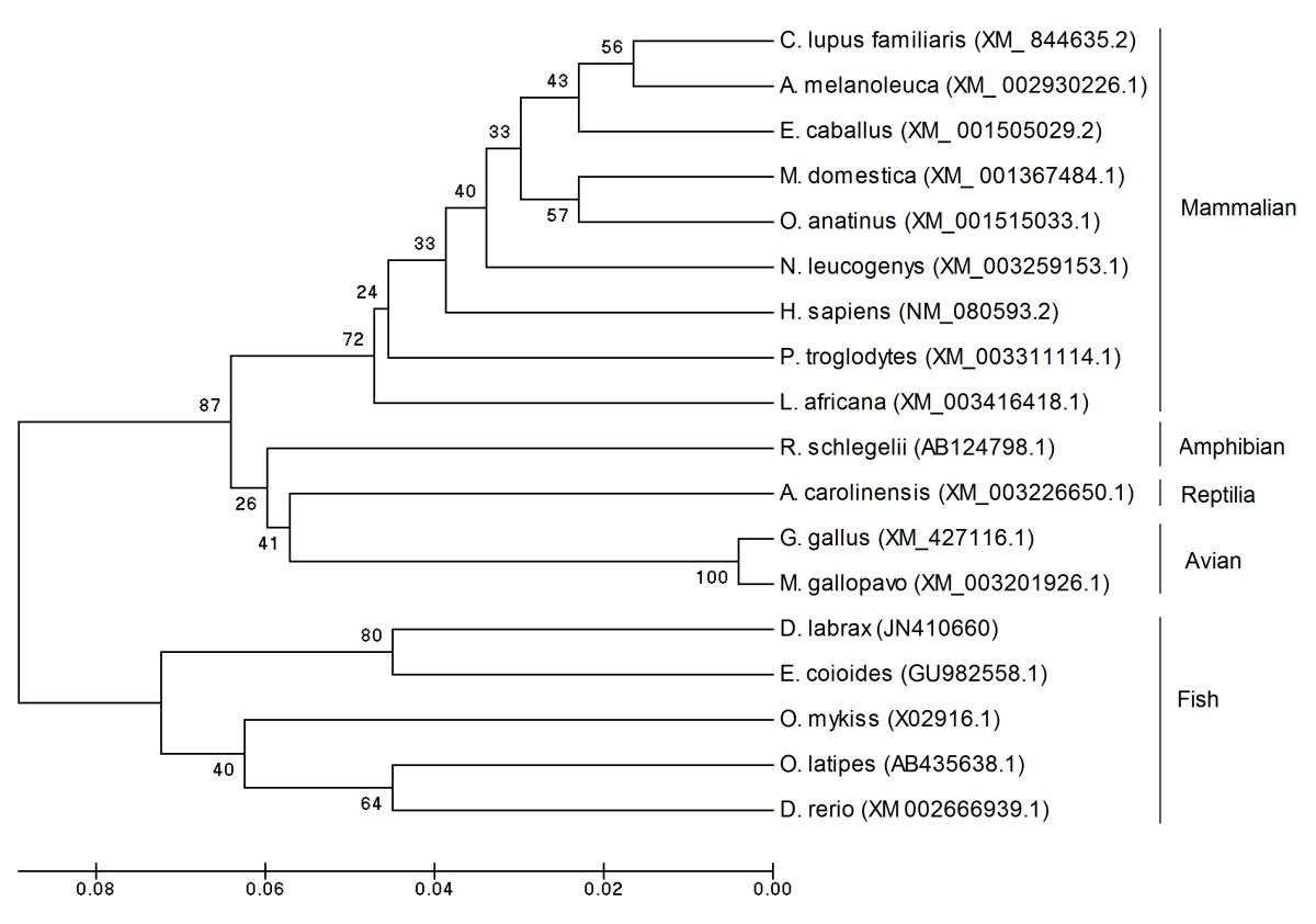http://static-content.springer.com/image/art%3A10.1186%2F1471-2172-12-69/MediaObjects/12865_2011_Article_420_Fig7_HTML.jpg