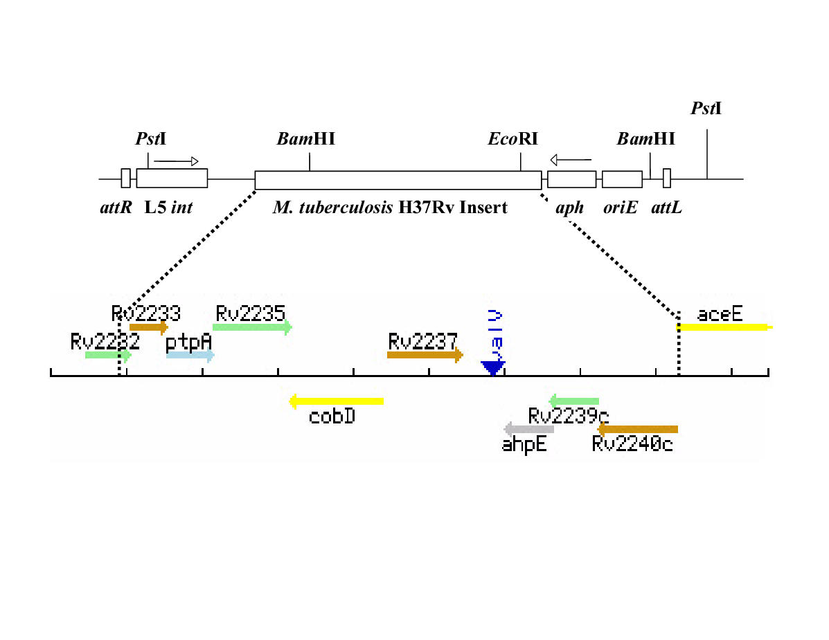 http://static-content.springer.com/image/art%3A10.1186%2F1471-2180-1-26/MediaObjects/12866_2001_Article_26_Fig6_HTML.jpg