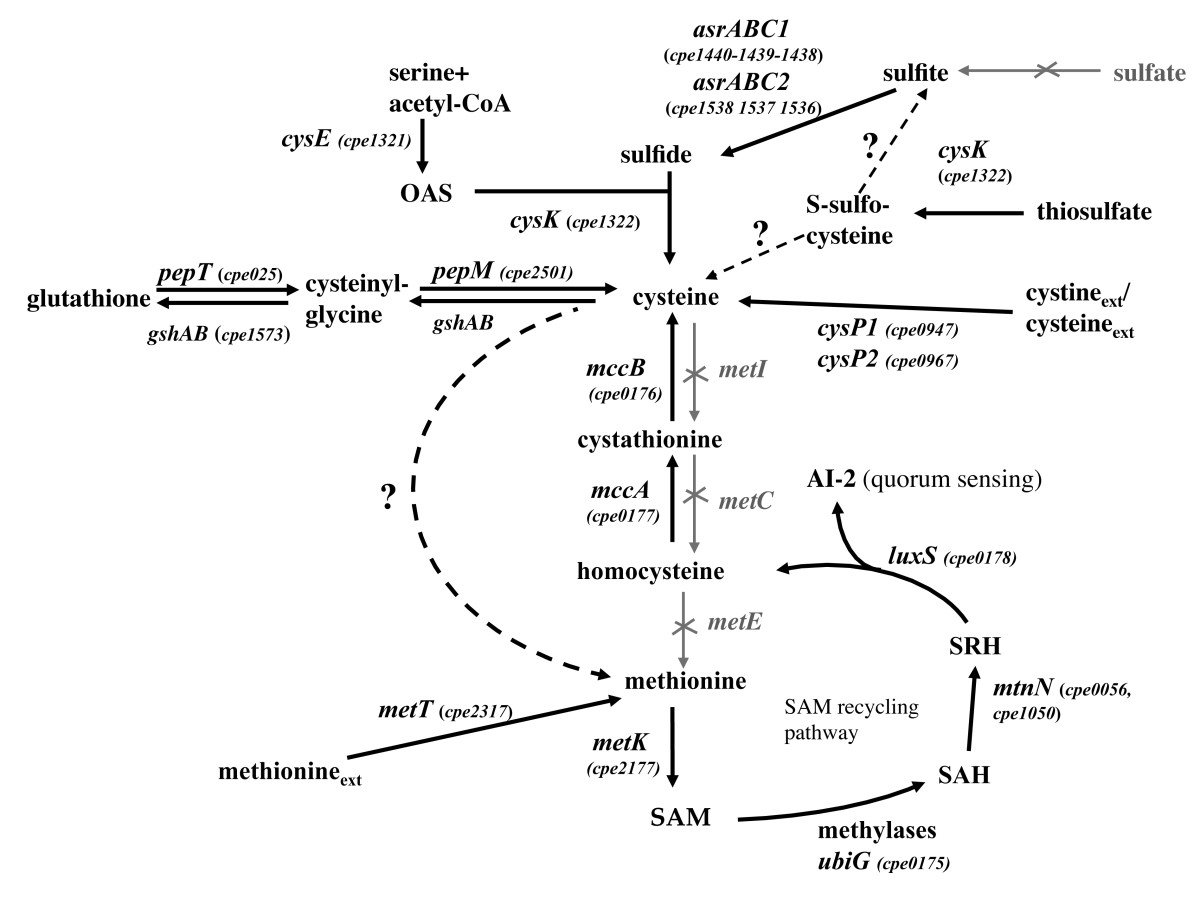 http://static-content.springer.com/image/art%3A10.1186%2F1471-2180-10-234/MediaObjects/12866_2010_Article_1190_Fig1_HTML.jpg