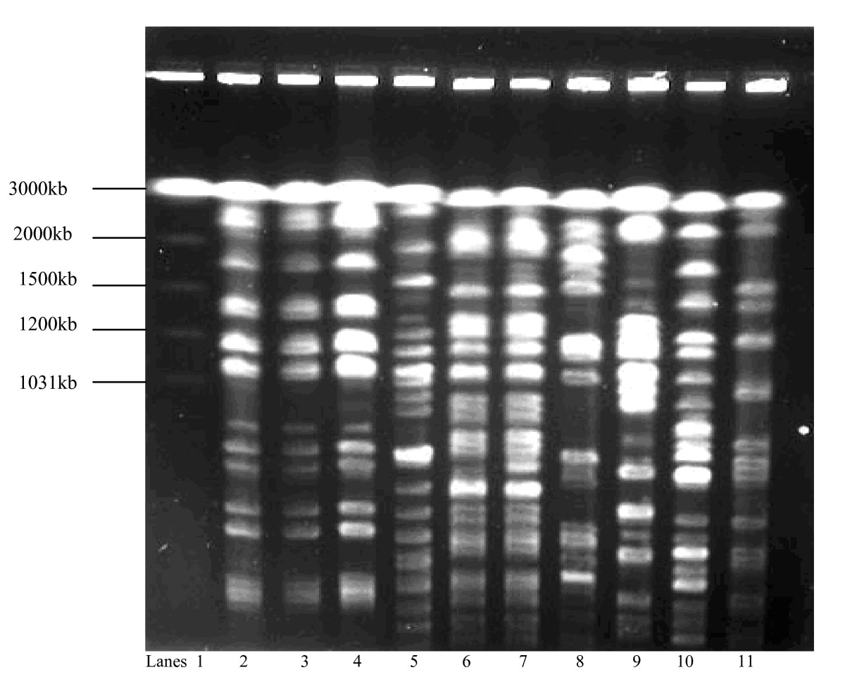 http://static-content.springer.com/image/art%3A10.1186%2F1471-2180-10-27/MediaObjects/12866_2009_Article_983_Fig1_HTML.jpg