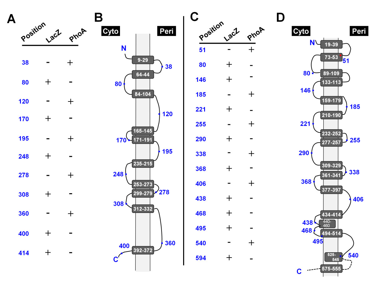 http://static-content.springer.com/image/art%3A10.1186%2F1471-2180-10-328/MediaObjects/12866_2010_Article_1284_Fig4_HTML.jpg