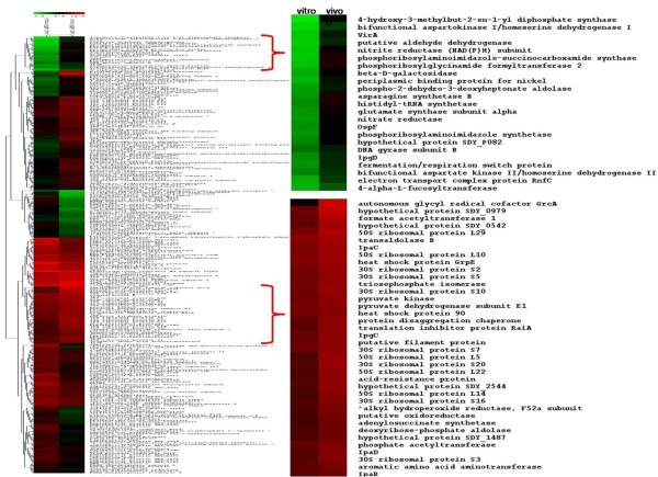 http://static-content.springer.com/image/art%3A10.1186%2F1471-2180-11-147/MediaObjects/12866_2010_1425_Fig4_HTML.jpg