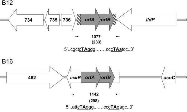 http://static-content.springer.com/image/art%3A10.1186%2F1471-2180-11-176/MediaObjects/12866_2011_1459_Fig3_HTML.jpg
