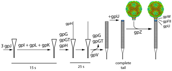 http://static-content.springer.com/image/art%3A10.1186%2F1471-2180-11-213/MediaObjects/12866_2011_1510_Fig6_HTML.jpg