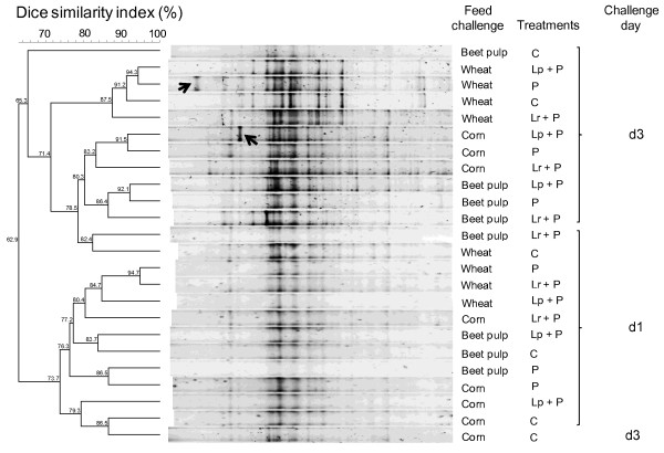http://static-content.springer.com/image/art%3A10.1186%2F1471-2180-12-142/MediaObjects/12866_2012_1685_Fig2_HTML.jpg