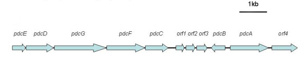 http://static-content.springer.com/image/art%3A10.1186%2F1471-2180-12-27/MediaObjects/12866_2011_1603_Fig4_HTML.jpg