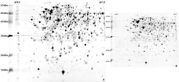 http://static-content.springer.com/image/art%3A10.1186%2F1471-2180-12-84/MediaObjects/12866_2011_1766_Fig1_HTML.jpg