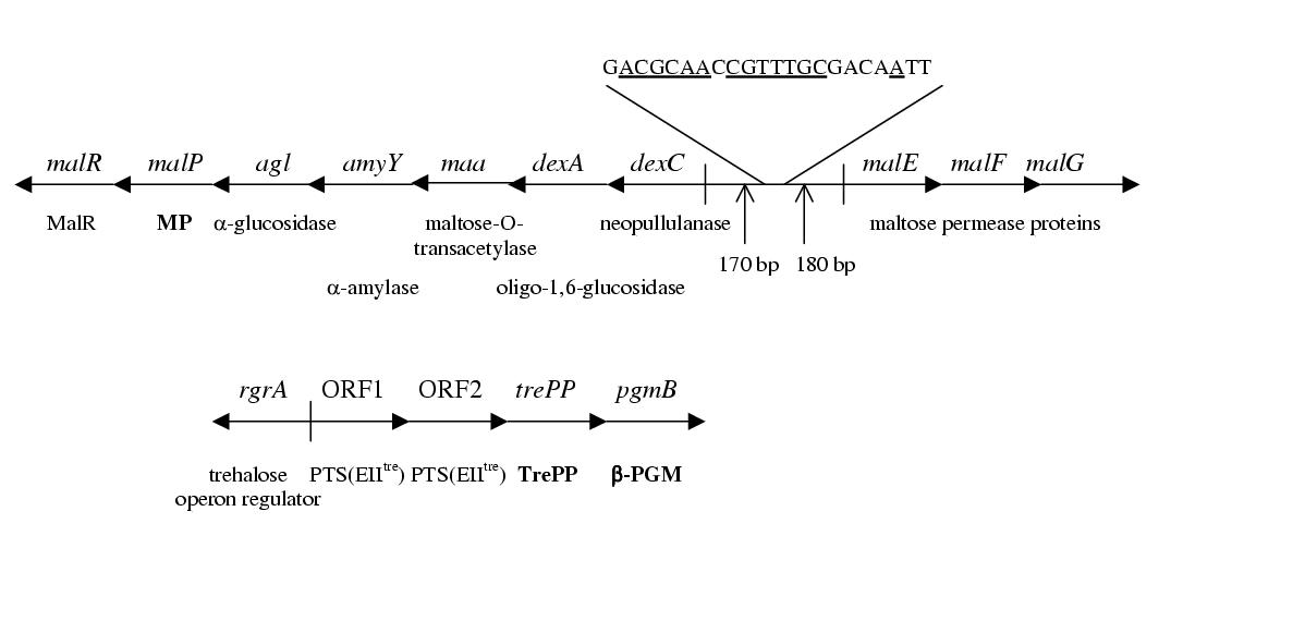 http://static-content.springer.com/image/art%3A10.1186%2F1471-2180-2-28/MediaObjects/12866_2002_Article_62_Fig1_HTML.jpg