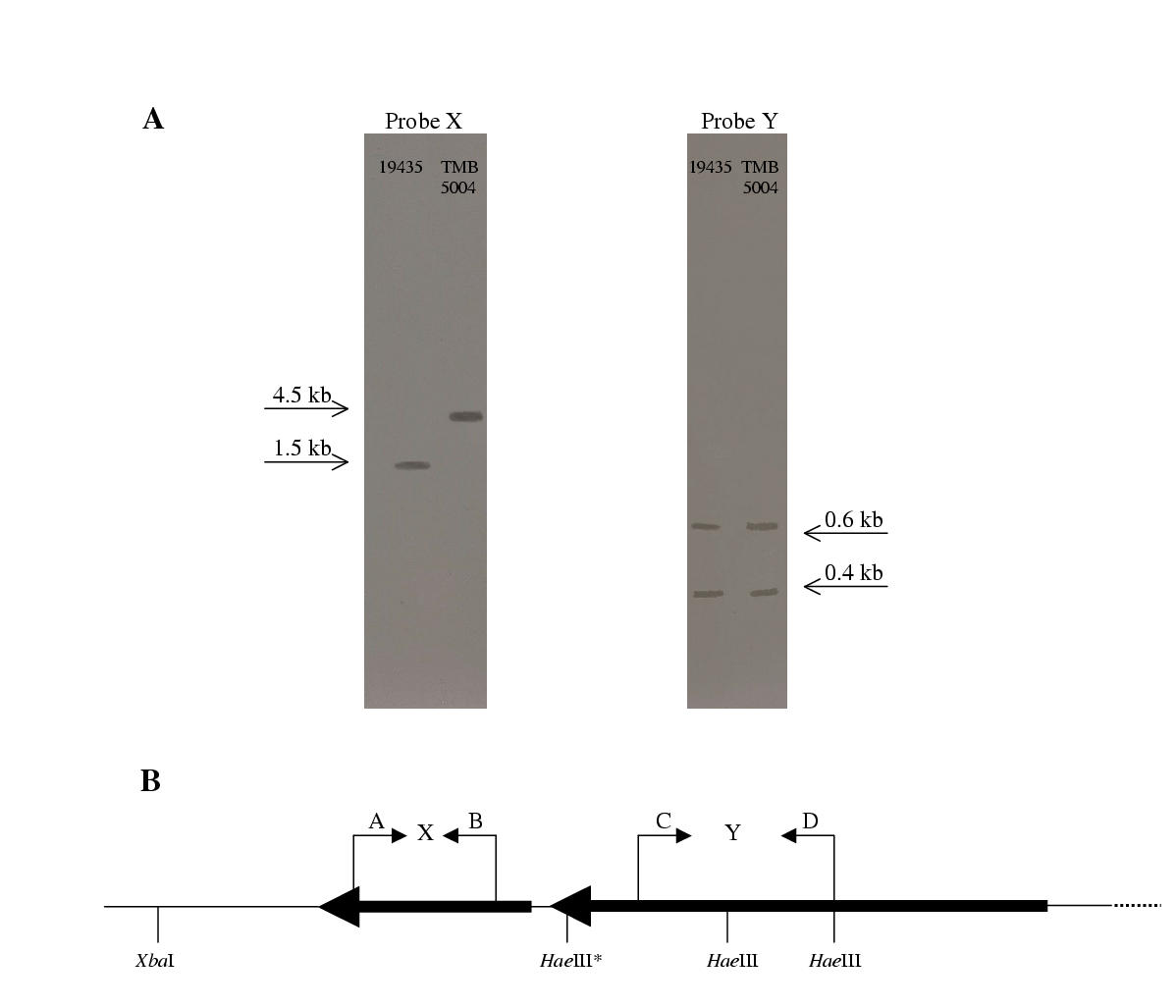 http://static-content.springer.com/image/art%3A10.1186%2F1471-2180-2-28/MediaObjects/12866_2002_Article_62_Fig2_HTML.jpg