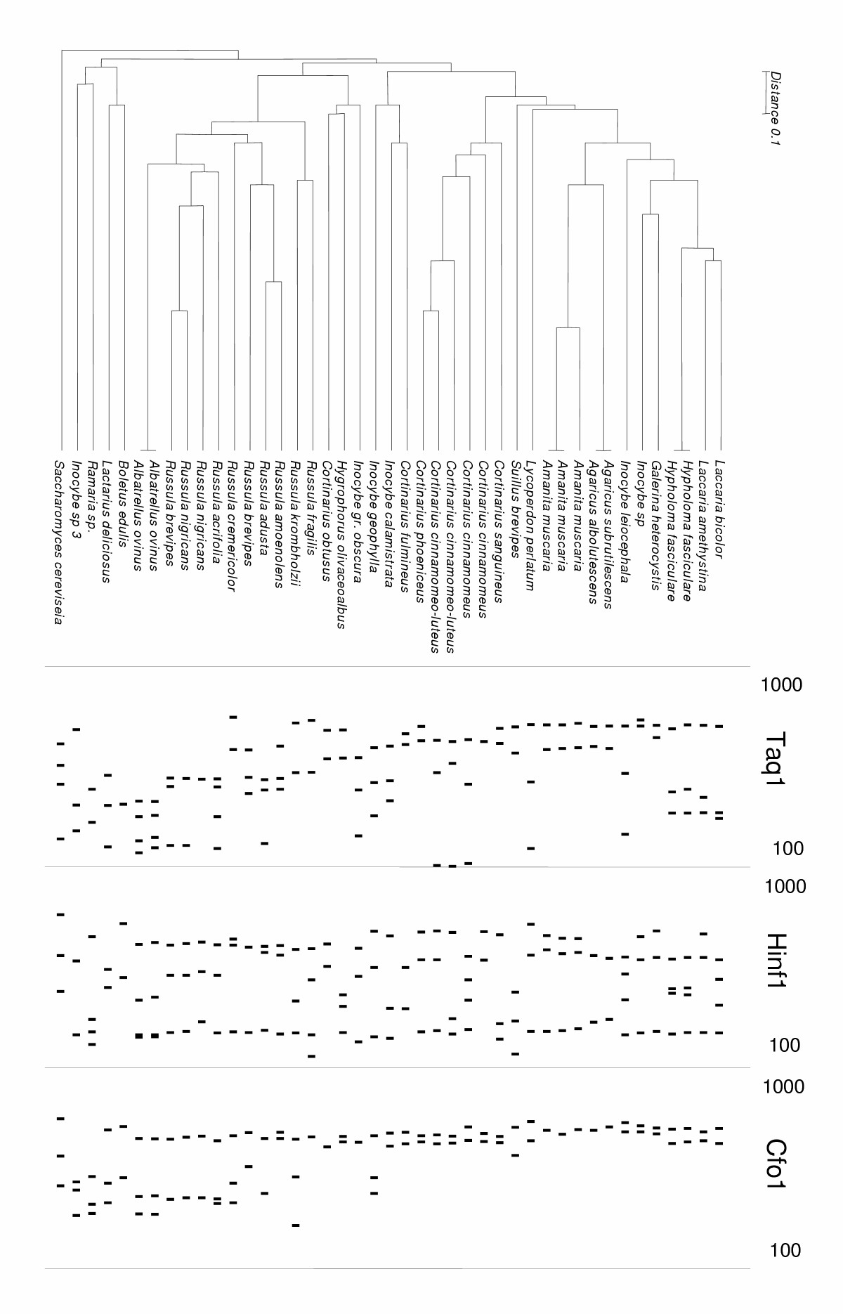 http://static-content.springer.com/image/art%3A10.1186%2F1471-2180-5-28/MediaObjects/12866_2004_Article_175_Fig4_HTML.jpg