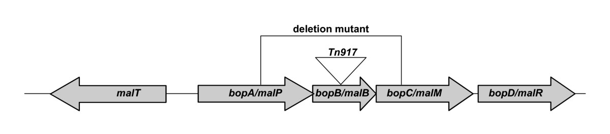 http://static-content.springer.com/image/art%3A10.1186%2F1471-2180-6-60/MediaObjects/12866_2006_Article_273_Fig1_HTML.jpg