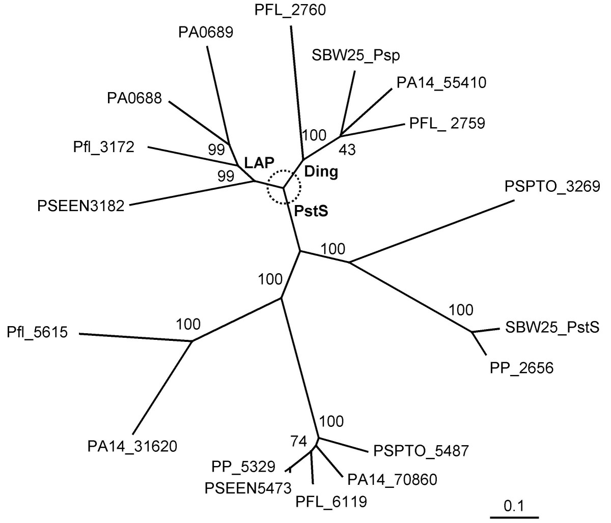 http://static-content.springer.com/image/art%3A10.1186%2F1471-2180-7-114/MediaObjects/12866_2007_Article_431_Fig2_HTML.jpg