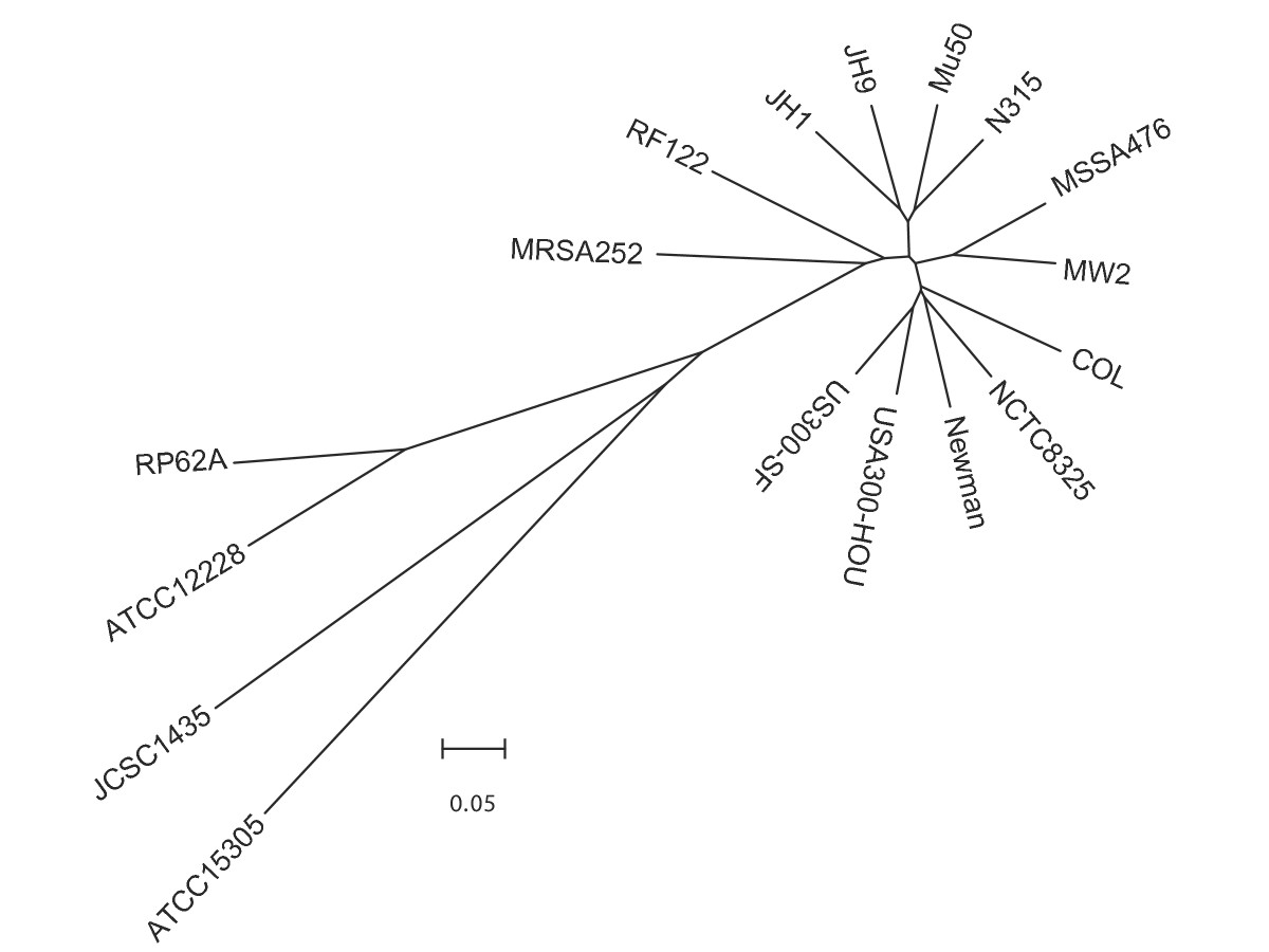 http://static-content.springer.com/image/art%3A10.1186%2F1471-2180-7-99/MediaObjects/12866_2007_Article_416_Fig8_HTML.jpg